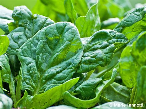 decorating ideas for a small bathroom growing spinach in your home garden