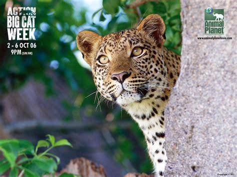 Animal Planet Wallpaper - animal planet wallpaper wallpapersafari