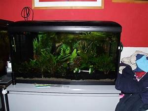 Aquarium 120l Mit Unterschrank : aquarium 80x30x40 mit zubeh r 120l in kelkheim fische aquaristik kaufen und verkaufen ber ~ Frokenaadalensverden.com Haus und Dekorationen