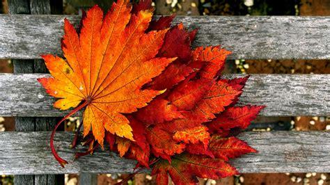 autumn wallpaper hd airwallpapercom