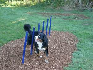 17 best images about dog park agility equipment on With best dog agility equipment
