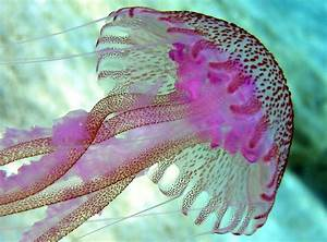 Jellyfish Facts You're 100% Going to Want to Read