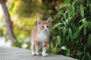 feline cat obstacles in diagnosing feline osteoarthritis