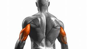 Tip  Stimulate New Triceps Growth