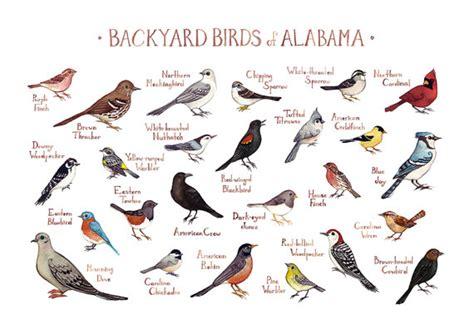 alabama backyard birds field guide art print watercolor