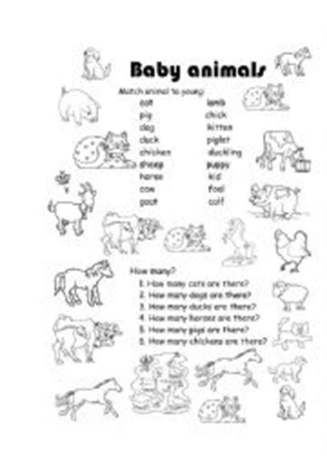 baby animals names worksheet baby animals worksheets