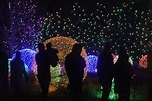 PHOTOS: Blossoms of Light at Denver Botanic Gardens — The Know