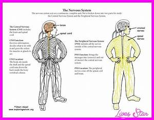 The Two Parts Of The Nervous System