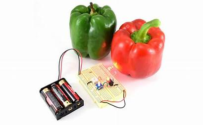 Produce Circuit Ripe Build Detect Electricity Science