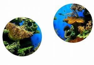 K L Wall Art : rundes glasbilderset korallenriff von k l wall art wall ~ Buech-reservation.com Haus und Dekorationen