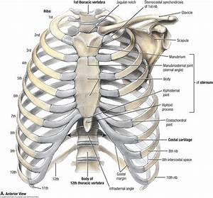 Duke Anatomy