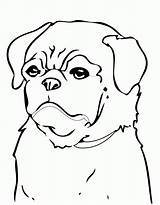 Coloring Pug Pages Puppy Dog Dogs Printable Beagle Print Minecraft Colouring Drawing Cute Pugs Cool Christmas Puppies Breed Animals Clipart sketch template
