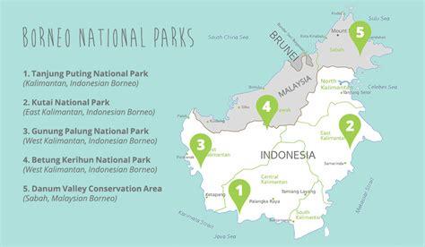 places   wild orangutans  indonesia