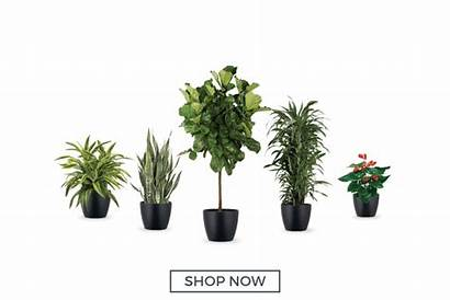 Plant Office Plants Indoor Packages Moss Cool