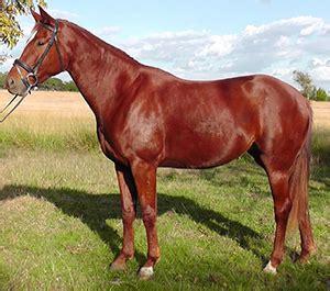 Kailio spalvos - Arkliai.com