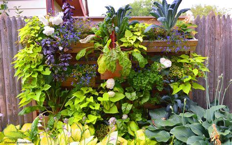 wall plants for shade part shade ornamental edible vegetable and herb list shawna coronado