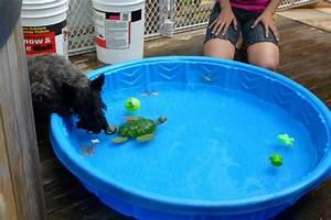 Plastic (non-inflatable) kid pool needed (Memphis ...