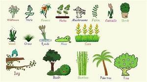 Plant, Names, List, Of, Common, Types, Of, Plants, And, Trees, In, English, With, Pictures
