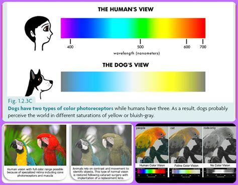 why do we see different colors pets are not color blind cats dogs parrots can