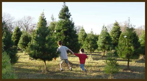 east texas christmas tree farms photo albums perfect