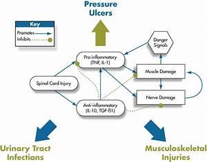 Pathological Process Of Inflammation - Image Mag