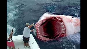 Image Gallery megalodon sightings