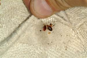 what do you put on bed bug bites 28 images bedbug With bed bugs in one room