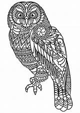 Coloring Owls Simple Print Pages sketch template