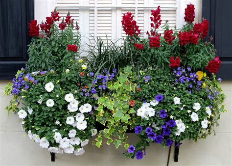irresistible flower box ideas   windows