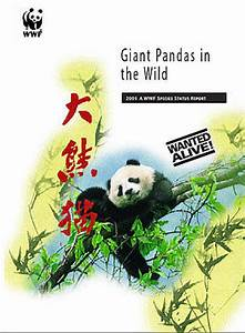 Wanted Alive: Giant Pandas in the Wild | WWF