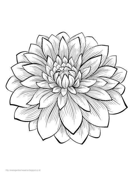 Gambar Mewarnai Bunga Dahlia Untuk Anak Paud Dan Tk Poster