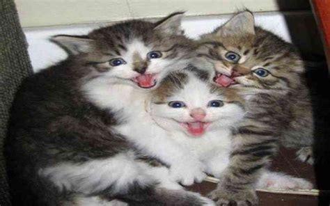 des chats mignons