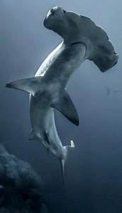 119 best images about shark on pinterest animaux san With serrurier maurepas