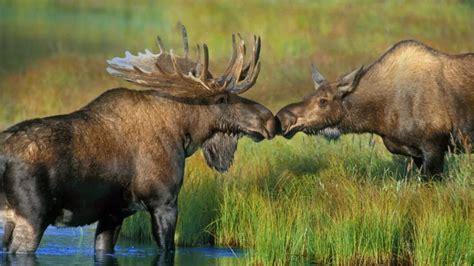 amor  relaciones de pareja entre animales guia