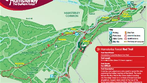 hamsterley forest red cycle trail cycle route