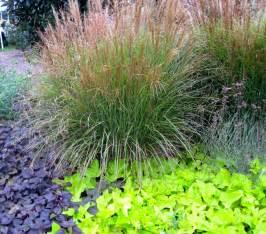 Ornamental Grass and Sweet Potato Vine