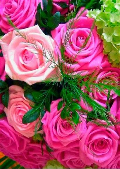 Flores Gifs Paisajes Flowers Rosas Roses Hermosas