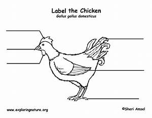 Chicken Labeling Page