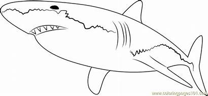 Shark Coloring Pages Sharks Colouring Sheet Printable