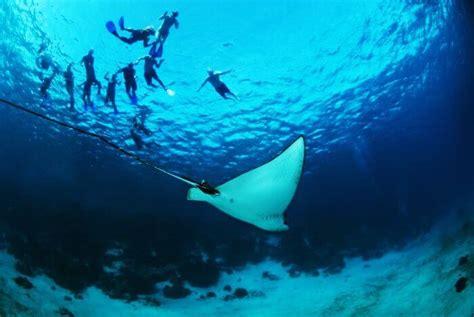 belize hole diving travel spots een scuba nature water hol guatemala fotoimpressie chan costa marine snorkelen reserve reef barrier mayan
