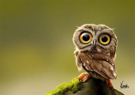 tiny owl photo  kenroberthansen  caricatures owls