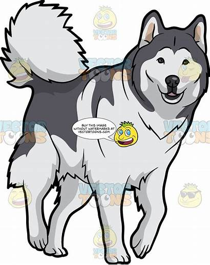 Malamute Alaskan Dog Lovely Clipart Cartoons