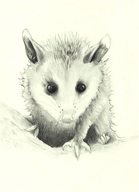 opossum clipart opossum clip newhairstylesformen2014