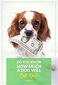 129 best dog costs how to budget for pets images on for How much does it cost to build a dog house