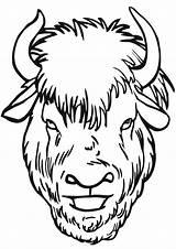 Bison Coloring sketch template