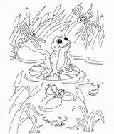 Pond Coloring Pages Frog Drawing Animals Fish Outline Colouring Animal Printable Sheets Graphicriver Easy Getdrawings Templates Resolution Cartoon Drawings Platinka sketch template