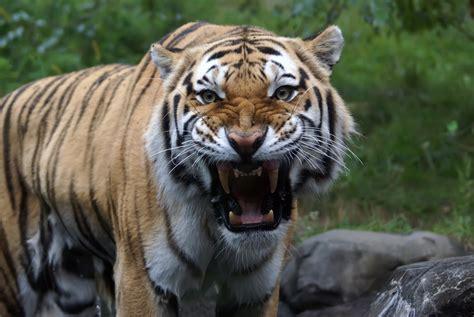 tiger global closes  billion   continue