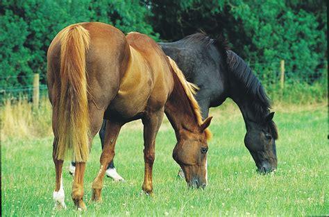 colic horses grazing gassy horse prevent imogen johnson august