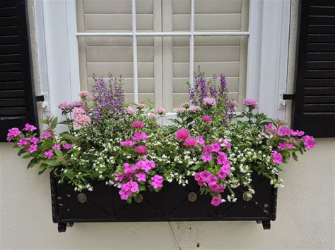 window box ideas gardening landscaping growing