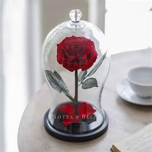 Rose Eternelle Sous Cloche : acheter une rose ternelle rouge premium x sous cloche ~ Farleysfitness.com Idées de Décoration